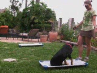 Video Dog Training Rescue Dog Off Leash