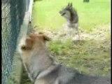 Vidéos montages chiens PART-2