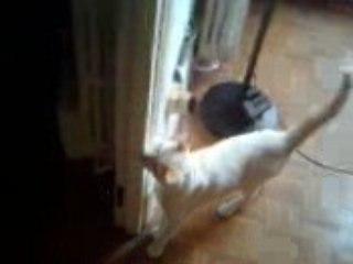 Cat invasion after using Symptohm:Melohman!