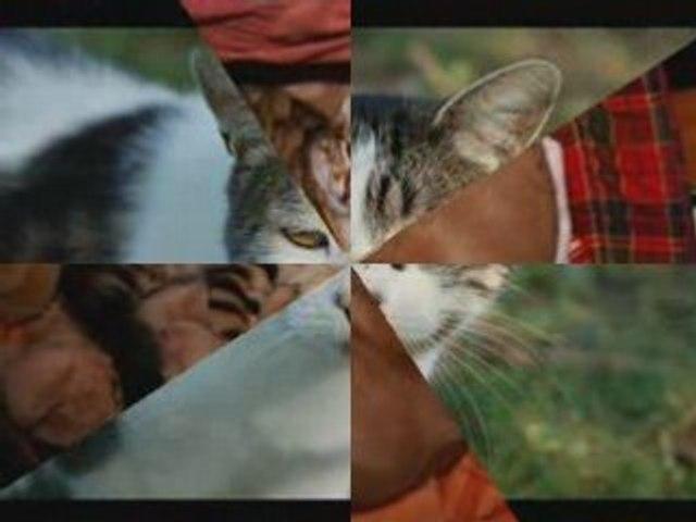 Les chats de gouttiere