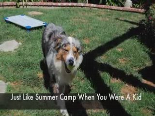 "San Diego Dog Training Camp Get In The ""Good Dog"" Club"