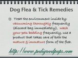 How do I deal with fleas? How to Deal with Fleas and Ticks