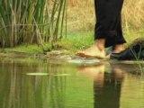 Tiger Woods PGA Tour 09 - Tiger Woods sur l'eau
