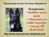 Panosteitis in the German Shepherd Dog