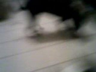 rottweiler en plein jeu