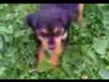 Doline la chienne de Dorothée