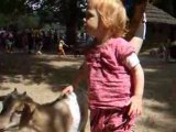 L'enclos des chèvres
