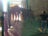 Sauvetage sos cheval 07 09 08 (3)