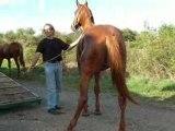 Sauvetage sos cheval 07 09 08 (5)