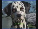 What Are Dog Parvo Symptoms