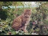 """La boutique officielle du clan """"Nos amis les chats"""""""