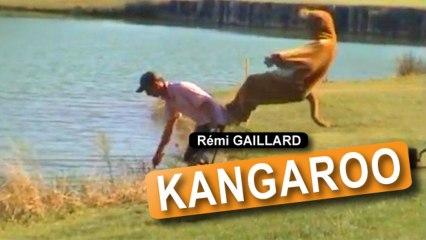 Remi Gaillard jako kangur