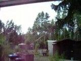 Baum fällen wald beastlover winsen busch kiefer natur wald