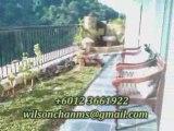 ARMANEE TERRACE CONDO Damansara Perdana (PJU 8) for rent