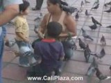 Cali Hotels - Thousands of Birds in Downtown Cali, Colombia