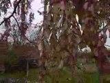 du vent dans les feuilles....