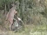 Attaque d'un cerf sur un chasseur