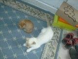 Nous trois, Rémi, Julie, et moi  (vidéo faite par Suzy)