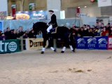 Frison salon du cheval 2005