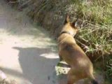 mes chiens ballade en foret