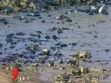 Pollution de Donges  : Après le nettoyage, la justice !