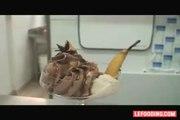 Recette de poires rôties par Flora Mikula, Les Saveurs de Flora