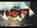 La cruaute envers les animaux