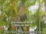 acai juice berry purely juice acai plan for teens