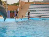 Spectacle dauphins a marineland 2