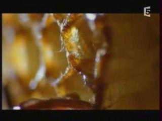 Documentaire abeille 1/5