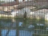 Zoo de Macouria - plantes sensitives - Guyane
