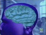 Esquizofrenia: Hipotesis virica
