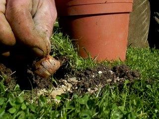 Visionnez les Cours Vidéo de Crocus - Cours de Jardinage