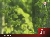 WWF France : Redonner vie aux forêts