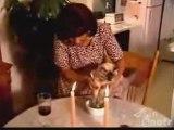 chat mange avec des fourchettes et  baguettes (chinoises) !