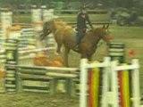 Week van het paard+TEAMCONTEST 017