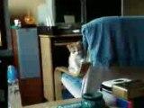 chaton pas doué