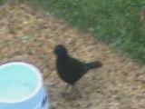 Montage oiseaux de mon jardin (Pour ma mère)