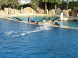 marineland spectacle dauphins hallowen novembre 2008