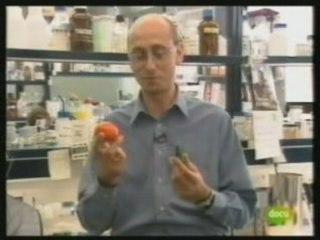 ¿Sabes que son los alimentos transgénicos?