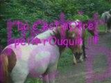 Quelques chevaux é pOneys de mOn club !!!