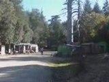 Forêt de Cèdres Azrou