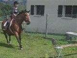 Petit trot cheval