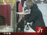 Animalia : Chiots, chat, rongeurs à adopter...