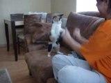 Boxing Cat - Boks yapan kedi