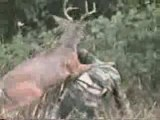 Ce matin un chasseur
