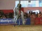 Salon du cheval Monpellier CSO et Dressage