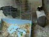 un lapin fait voir a un chat qu'il est le boss!mdr