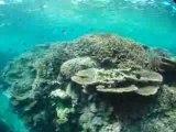 石垣島米原のサンゴ礁