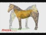 Toutes les races de chevaux (Editions novembre 2008)